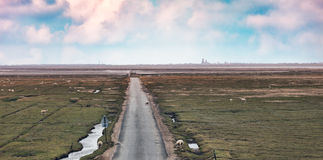 Wadden sea road to the island Stock Images