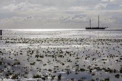 Waddenseten i Nederländerna Royaltyfri Bild