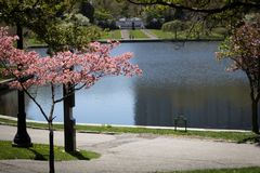 Wade Lagoon park outside Cleveland museum of art. Ohio, pond, pink, green, trees, path, trail, peace, tranquility, sunny, spring, summer royalty free stock image