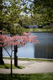 Wade Lagoon park outside Cleveland museum of art. Ohio, pond, pink, green, trees, path, trail, peace, tranquility, sunny, spring, summer stock images