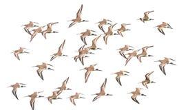 Waders bird Stock Photos