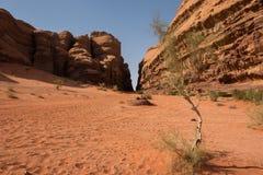 wadi ρουμιού της Ιορδανίας &epsilo Στοκ φωτογραφία με δικαίωμα ελεύθερης χρήσης