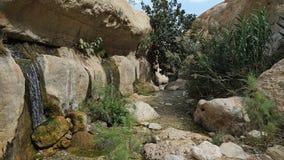 Wadi Arugot in het natuurreservaat van Ein Gedi, Israël Royalty-vrije Stock Fotografie