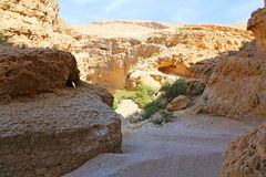 Wadi Bani Khalid Oman Arkivbilder