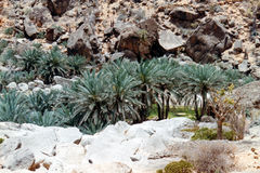 Wadi Clison Arkivbild