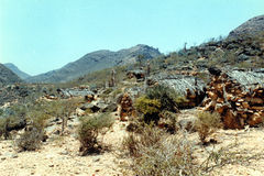 Wadi Clison Royaltyfri Foto