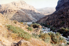Wadi Clison. Soqotra island on Indian Ocean, Yemen Royalty Free Stock Photography