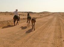 WADI - HALFA, SUDAN - 20 November, 2008:  En okänd manridning Arkivbilder
