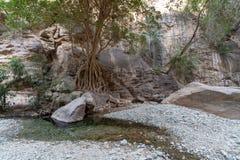Wadi Lajab i det Jizan landskapet, Saudiarabien arkivfoton
