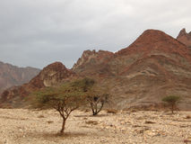 Wadi and mountains Royalty Free Stock Images