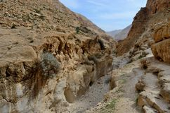 Wadi Murabba`at canyon - ravine cut by a seasonal stream,Israel Royalty Free Stock Photos