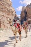 WADI MUSA JORDANIEN - NOVEMBER 18, 2012: Kamel för hyra och arabhyresgäst på den forntida Petra-staden Petra är historisk och arc Royaltyfri Bild