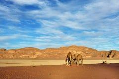 Wadi Rum Desert Photos stock