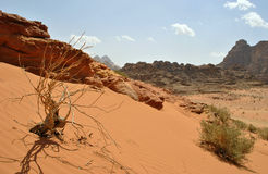 Wadi Rum Desert - Jordan Royalty Free Stock Photography