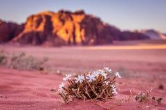 Wadi Rum desert  in Jordan. Stock Photos