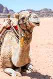 Wadi Rum , Jordan Stock Photos