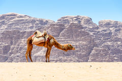 Wadi Rum , Jordan Stock Photo
