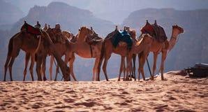 Wadi Rum, la vallée de la lune, Aqaba, Jordanie, Moyen-Orient Photos stock
