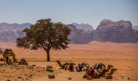 Wadi Rum maestoso, aka valle della luna, di una riserva naturale protetta con le montagne drammatiche dell'arenaria e della rocci fotografia stock libera da diritti