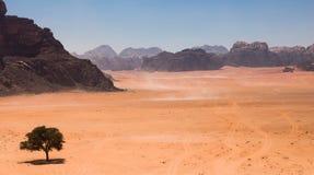 Wadi Rum maestoso, aka valle della luna, di una riserva naturale protetta con le montagne drammatiche dell'arenaria e della rocci immagini stock libere da diritti