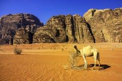 Wadi Rum, valle della luna fotografie stock