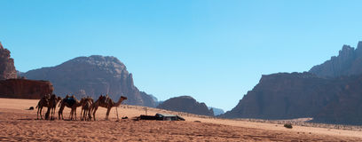 Wadi Rum, camel, camels, dirt road, the Valley of the Moon, Jordan, Middle East, desert, landscape, nature, climate change. Jordan, 03/10/2013: landscape and a Royalty Free Stock Photos