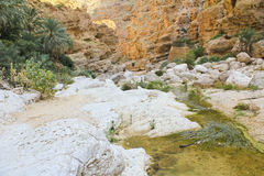 The Wadi Shab with emerald green water Royalty Free Stock Photo