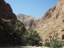 Wadi Shab Oasis, Omã Imagem de Stock Royalty Free