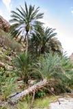 Wadi Shab Oman stock fotografie