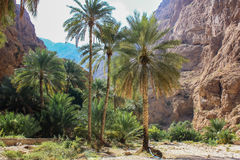 Wadi Shab in Oman Royalty Free Stock Image