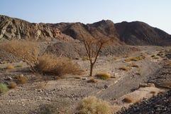 Wadi Shahamon dichtbij Eilat Stock Foto