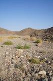 Wadi Shahamon near Eilat. Israel, arid Royalty Free Stock Photo