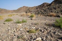 Wadi Shahamon near Eilat. Israel, arid Royalty Free Stock Images
