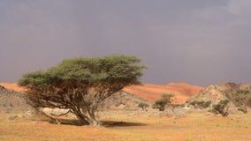 Wadi Sumayni Royalty-vrije Stock Afbeeldingen