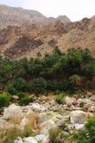 Wadi Tiwi Immagine Stock