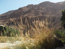 A view of Wadi Tiwi oasis in Oman, Arabian Peninsula. Mountains, water, reeds and palm trees Stock Photo