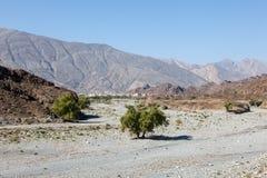 Wadi w Oman, Środkowy Wschód Zdjęcia Stock