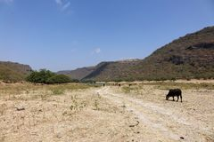 Wadi w sułtanacie Oman, blisko Salalah Fotografia Royalty Free