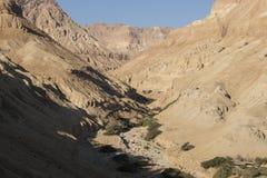 Wadiego Arugot rzeka, ein Gedi rezerwat przyrody, nieżywy morze, Izrael Obraz Royalty Free
