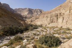 Wadiego Arugot rzeka, ein Gedi rezerwat przyrody, nieżywy morze, Izrael Obrazy Royalty Free
