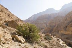 Wadiego Arugot rzeka, ein Gedi rezerwat przyrody, nieżywy morze, Izrael Zdjęcia Royalty Free