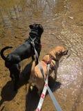 wading вода Стоковые Изображения RF