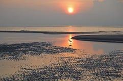 Wading птица берега с отражением океана Стоковые Изображения
