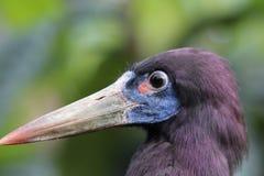 A wading bird Royalty Free Stock Image