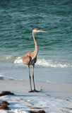 Wading bird on sand Stock Photos