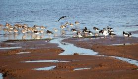 Wading Birds Stock Image
