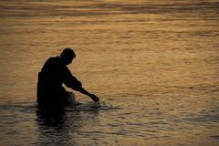 Wading fisherman at sunset. Wading fisherman pulling in net by hand. The water is reflecting the golden sunset Stock Photo