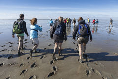 Wadlopers (που περπατά τους υγρότοπους) Στοκ εικόνα με δικαίωμα ελεύθερης χρήσης
