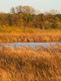 Wadsworth Prairie Nature Preserve Illinois Royalty Free Stock Images