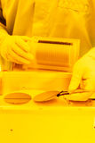 Wafer handling in a Yellow Room. Handling of 3 wafers inside the yellow room of a particle free cleanroom. The wafers are placed on a loadlock table with stock image